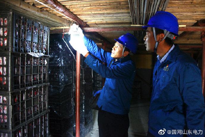 国网临朐县供电公司员工在寺头镇山楂冷风库进行用电设备检查